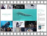 WWF拯救江豚公益活动 72小时邂逅.jpg