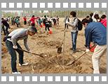 2014年北京电通植树节.jpg